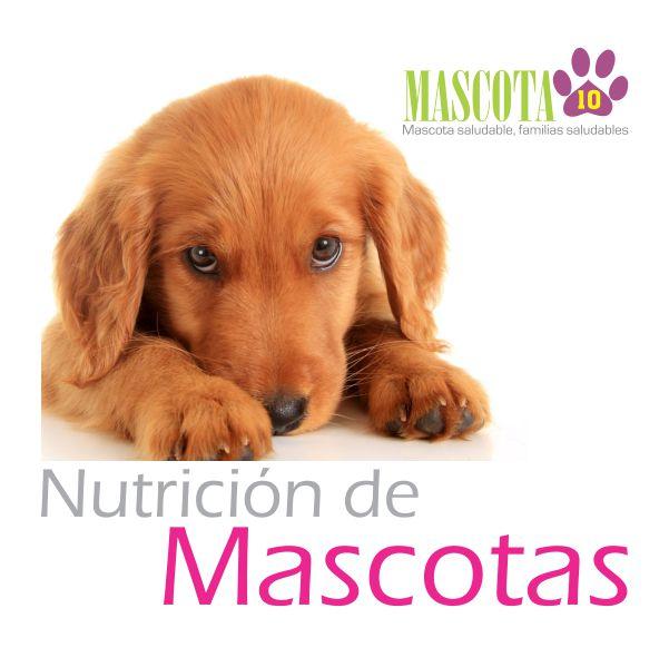 SS - Cabezote Nutricion Mascotas 001